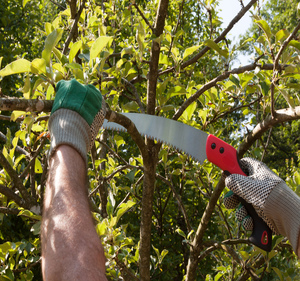 Pruning and Yard Clean Ups