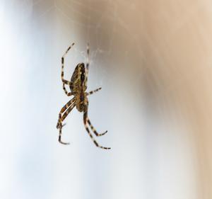 Spider Barriers