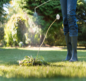 Lawn and Tree Fertilizing