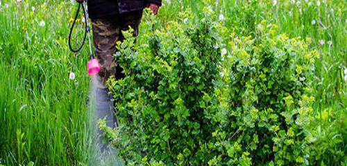 Why Your Lawn Needs Weed Control Services?